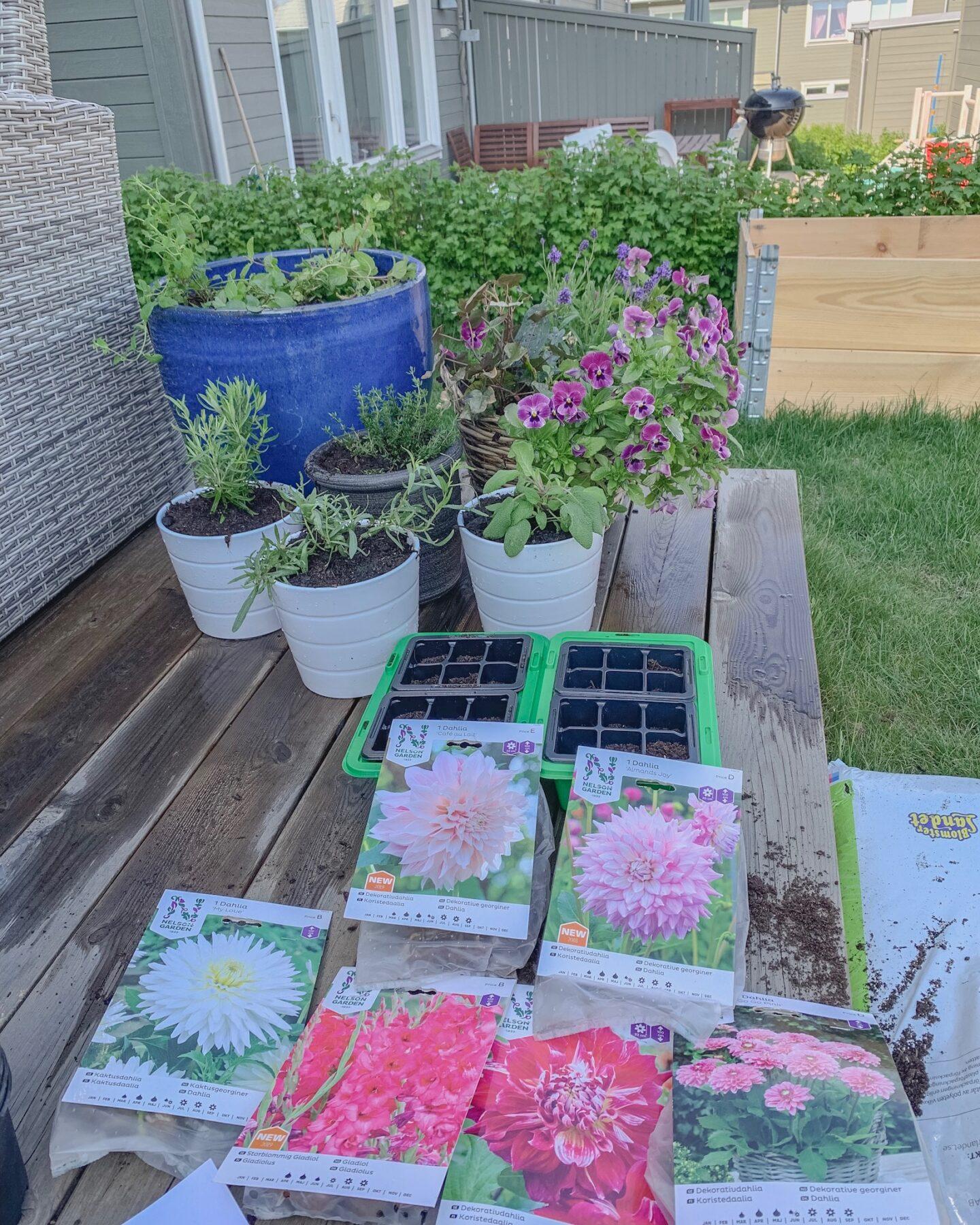Hela trädgården ska blomma